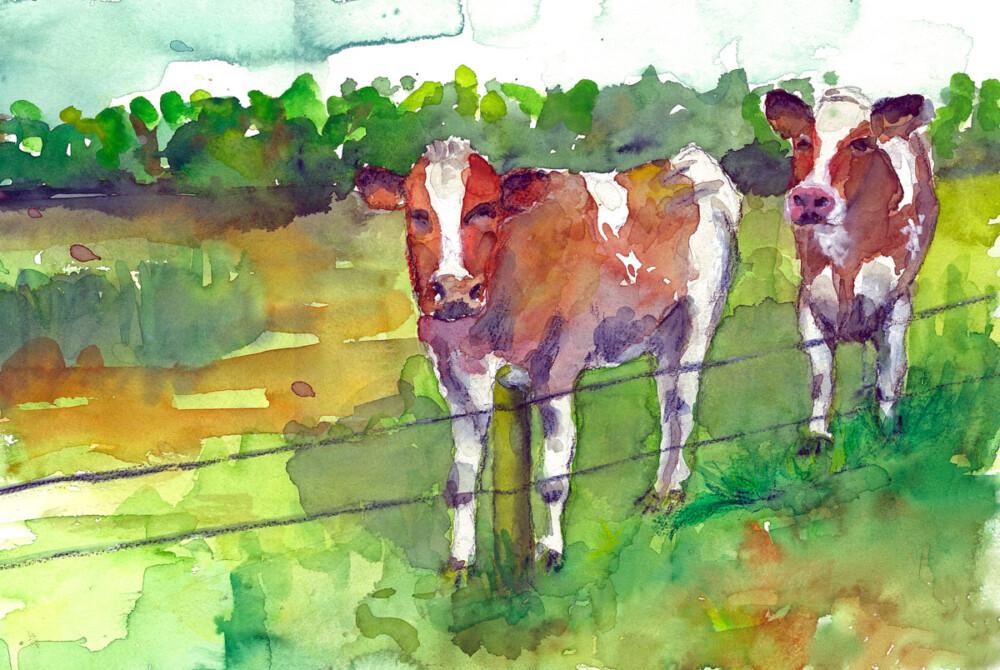 Koeien in de Gooren